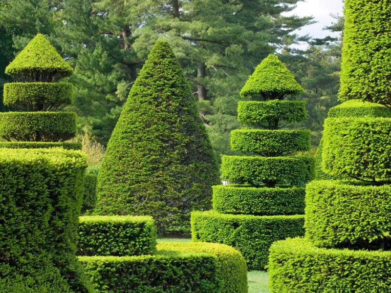 Стрижка и уход за растениями