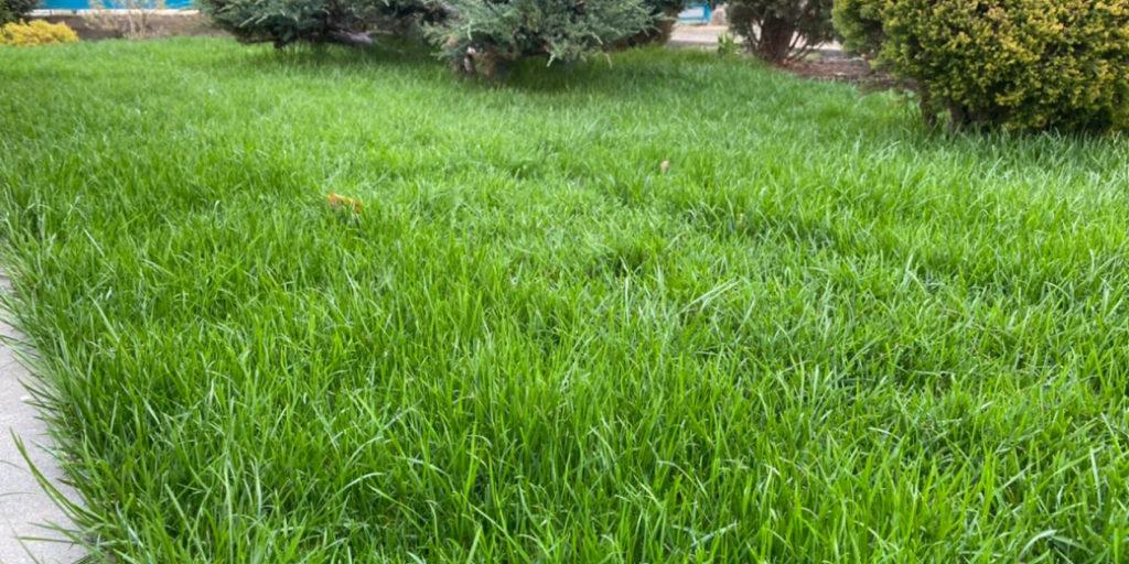 Рулонные газоны фото Майкоп
