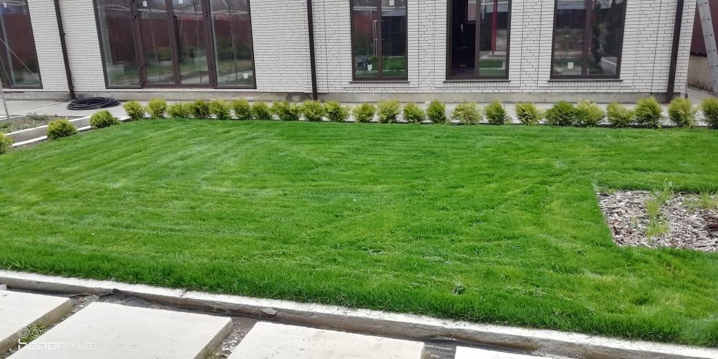 Рулонные газоны фото Анапа
